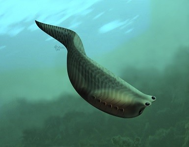 An artist illustration of Metaspriggina, which lived about 514 to 505 million years ago during the Cambrian period is shown (Reuters)