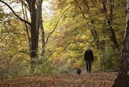 Brisk walk can reduce women's stroke risk, study finds