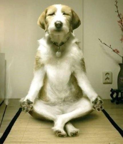 Funny Animal Yoga Poses,Yoga,Yoga 2015,International Yoga Day 2015,dog yoga poses,animal yoga poses,cat yoga poses,Yoga Day 2015