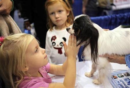 A girl pets a Papillon dog at the ''Meet the Breeds'' exhibition in New York October 17, 2009.