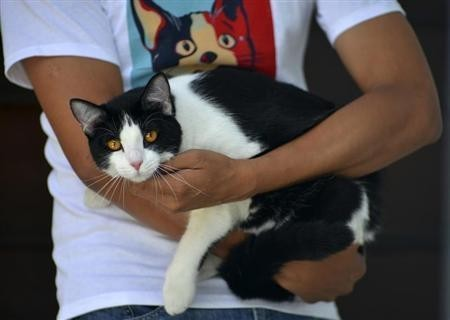 Mayoral candidate Morris the Cat is held by his owner at his home in Xalapa, capital of the state of Veracruz June 15, 2013.  REUTERS/Oscar Martinez