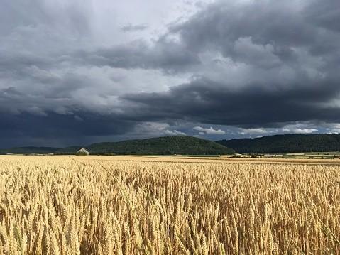 Rainfall in field