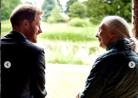 Prince Harry and Dr. Jane Goodall