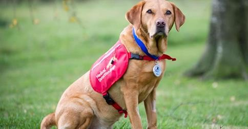 Dog Receives Blue Cross Medal For Saving Owner's Life By Sniffing Out Cancer