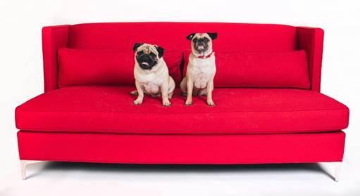 Paul Anka,Lady Dynamite,Lady Dynamite pugs,pugs,Netflix Pitch,famous dogs of Netflix Pitch,famous dogs
