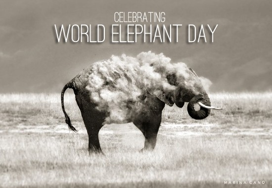 World Elephant Day,Elephant Day 2015,Elephant Day,World Elephant Day 2015,World Elephant Day quotes,World Elephant Day sms,World Elephant Day pictures