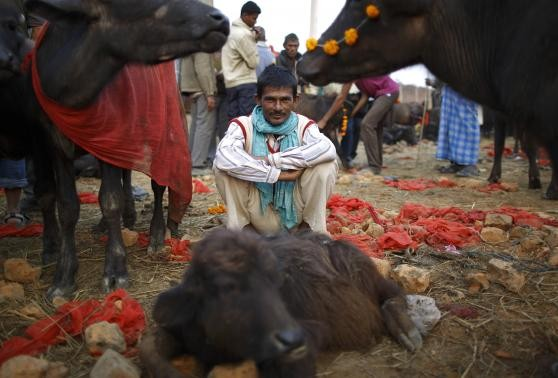 A herder sits inside an enclosure for buffalos awaiting sacrifice on the eve of the sacrificial ceremony for the