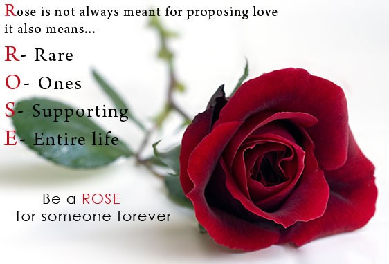 Happy rose day,happy rose day wishes,happy rose day greetings,rose day photos,rose day images,rose day,rose day wishes,rose day WhatsApp messages,rose day facebook messages,Valentine week,Valentine day,Propose Day,Chocolate Day,Teddy Day,Promise Day,Hug D