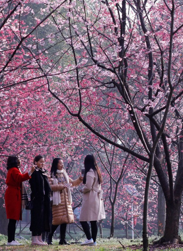 Colorful spring,Spring in blossom,Spring blossom,Spring blossom  pics,Spring blossom around world,springtime