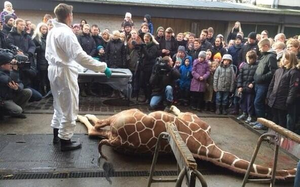 Photo that surfaced in Twitter showed that the first giraffe Marius' killing was shown to a crowd including children