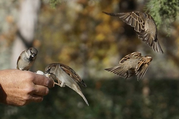 World Sparrow Day 2018,World Sparrow Day,World Sparrow Day quotes,World Sparrow Day wishes,World Sparrow Day greetings,World Sparrow Day sms,World Sparrow Day slogans,World Sparrow Day pics,World Sparrow Day images