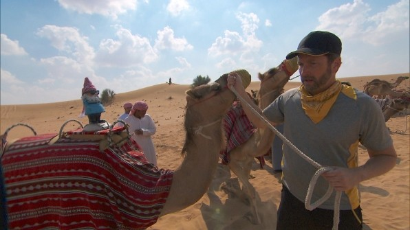 The teams will race camels in Dubai