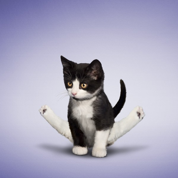 Funny Animal Yoga Poses,Yoga,Yoga 2015,International Yoga Day 2015,dog yoga poses,animal yoga poses,cat yoga poses,Yoga Day 2015