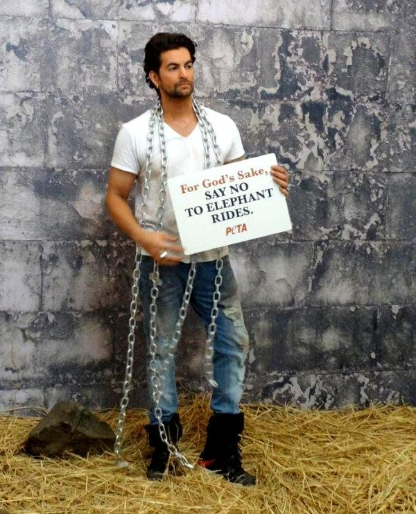 Neil Nitin Mukesh,Neil Nitin Mukesh peta,PETA,Neil Nitin Mukesh Peta campaign,Elephants Used for Joy Rides Are Abused,Elephants