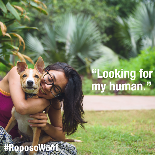 Roposo,NGO Friendicoes SECA,Society for the Eradication of Cruelty to Animals,SECA,PETA,dog rights,Thangaraj