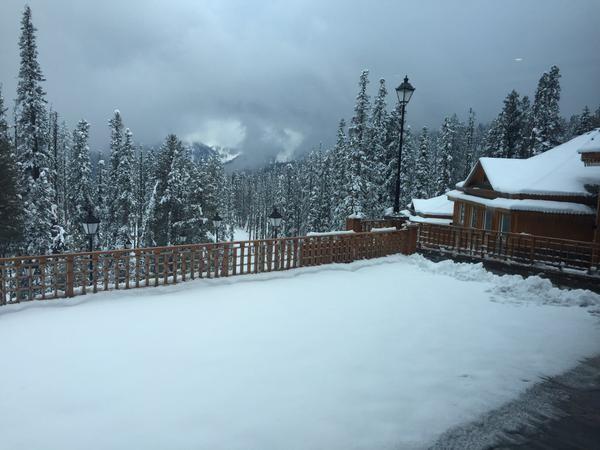 贾杰和雪雪