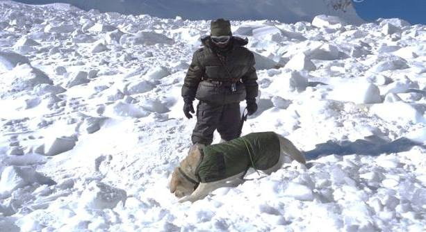 Indian Army Avalanch Rescue Operation Dogs