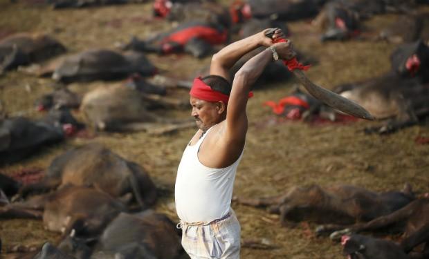 Gadhimai Hindu Festival