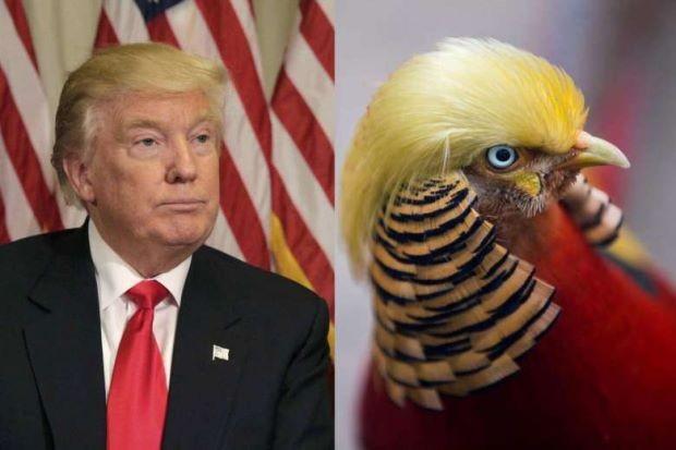 Trump bird