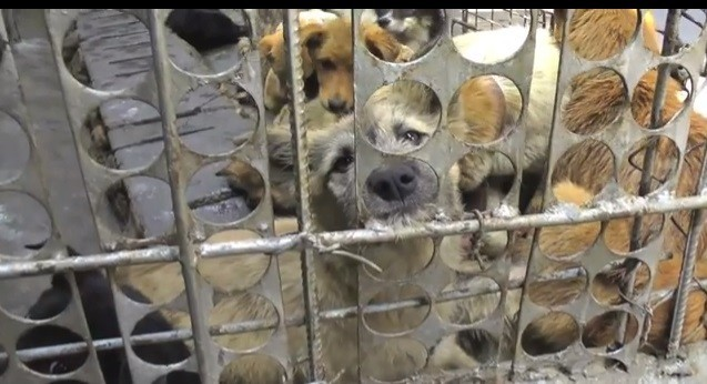 Dogs Clubbed to Death for Meat: Undercover Video Throws Light on China's Animal Cruelty