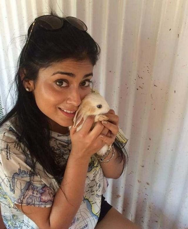 Shriya Saran Latest Pics,Shriya Saran,actress Shriya Saran,south indian actress Shriya Saran,Shriya Saran Latest images,Shriya Saran Latest photos,Shriya Saran Latest stills,Shriya Saran pics,Shriya Saran images,Shriya Saran stills,Shriya Saran hot pics