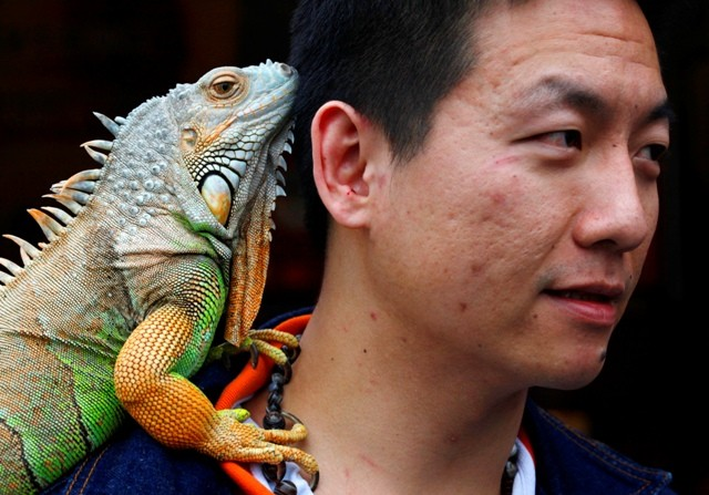 Unusual pets,pets,people and pets,odd ones out