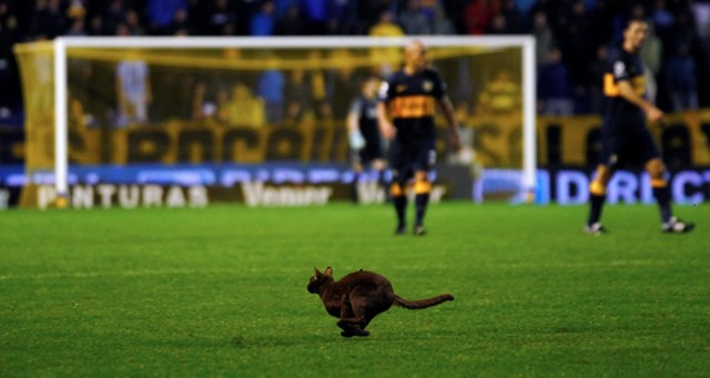 Odd Ones Out: Animals on the Pitch
