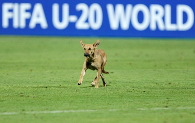 Sports,animals in pitch,animals on pitch