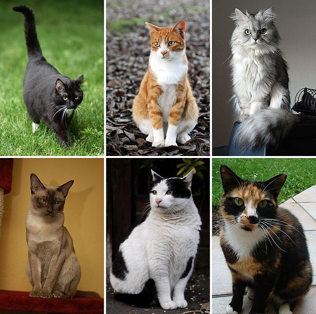 National Cat Day 2014: here are 10 quotes and 5 Videos to celebrate the love for felines.