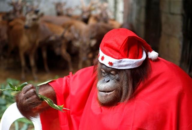 Christmas 2014 How Animals Celebrate The Festive Season