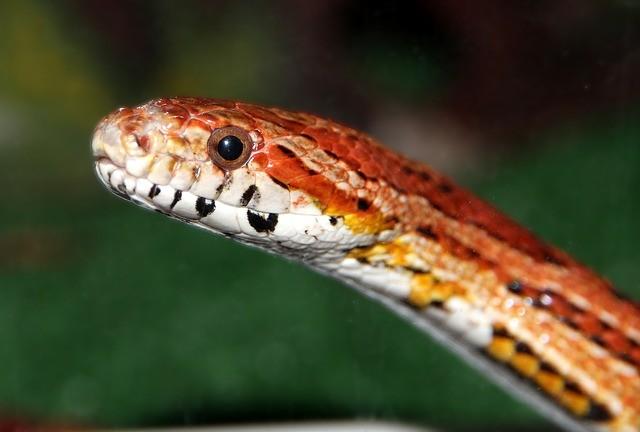 In photos: Rat snake causes panic in Jammu and Kashmir