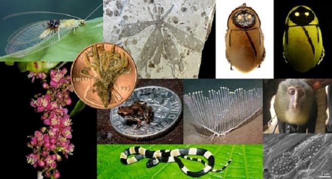 Top 10 new species of 2012