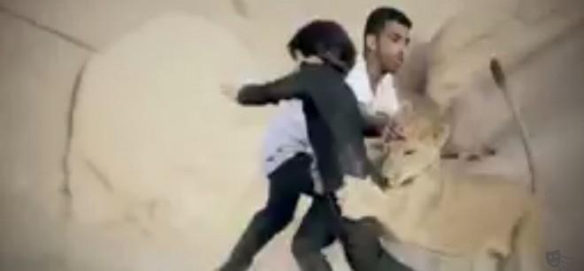 Lion attack in Saudi Arabia