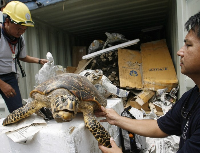 Protected Areas and Wildlife Bureau personnel inspect preserved green turtles and hawksbill turtles
