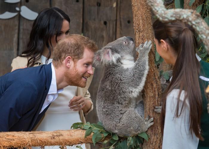 Prince Harry at Taronga Zoo
