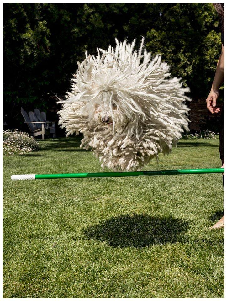 Mark Zuckerberg,Mark Zuckerberg dog,mark's dog beast,beast,beast dog photos,cute dog photos