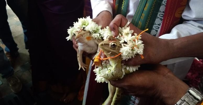 udupi frog marriage