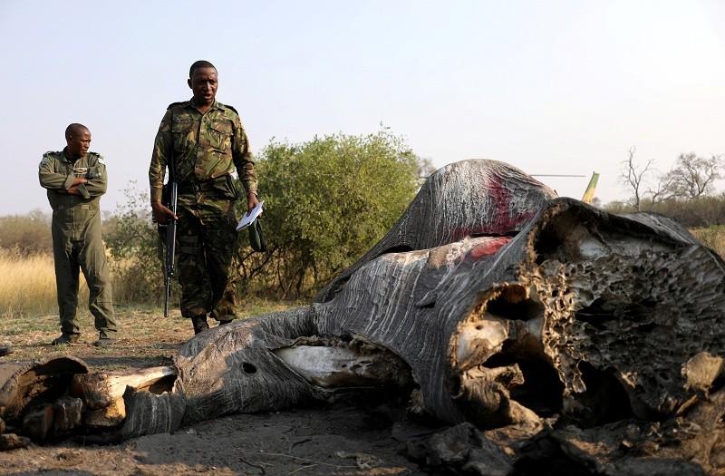 Botswana,Wildlife,wwf,World Wildlife Fund,Wildlife Preservation,Elephants in danger,poaching elephants for ivory,herds of elephants killed