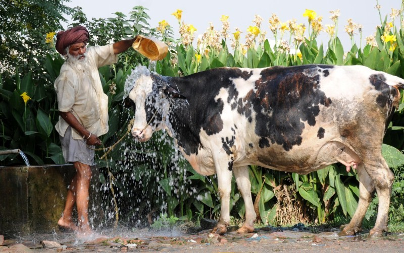 Heatwave in India,Heat wave in India,Natural disasters and extreme weather,extreme weather,hot weather,heat wave death toll,Andhra Pradesh heat wave,Telangana heat wave,Andhra Pradesh heat wave pics,heat wave death toll india,heatwave