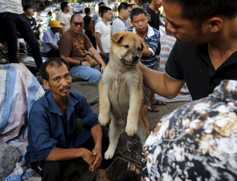 China's Dog Meat Festival,Dog Meat Festival,China Yulin dog,China's Yulin Dog Meat Festival,dog meat festival,dog meat,Yulin Dog Meat Festival,chinese dog eating,dogs killed for meat,dog meat festival pictures,chinese dog meat market,chinese dog meat farm