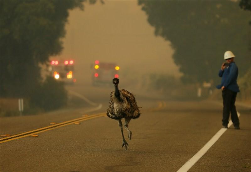 Wildfire ignites in California,Wildfire,Wildfires spread in California,Santa Barbara,heat wave,heat wave in California