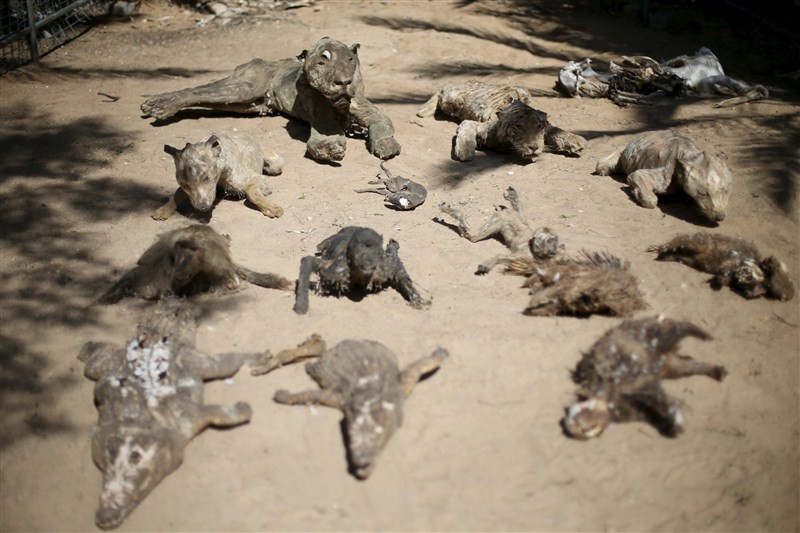 Worst zoo in the world,Worst zoo,Gaza zoo,Palestinian territory,Worst zoo in World,animals died