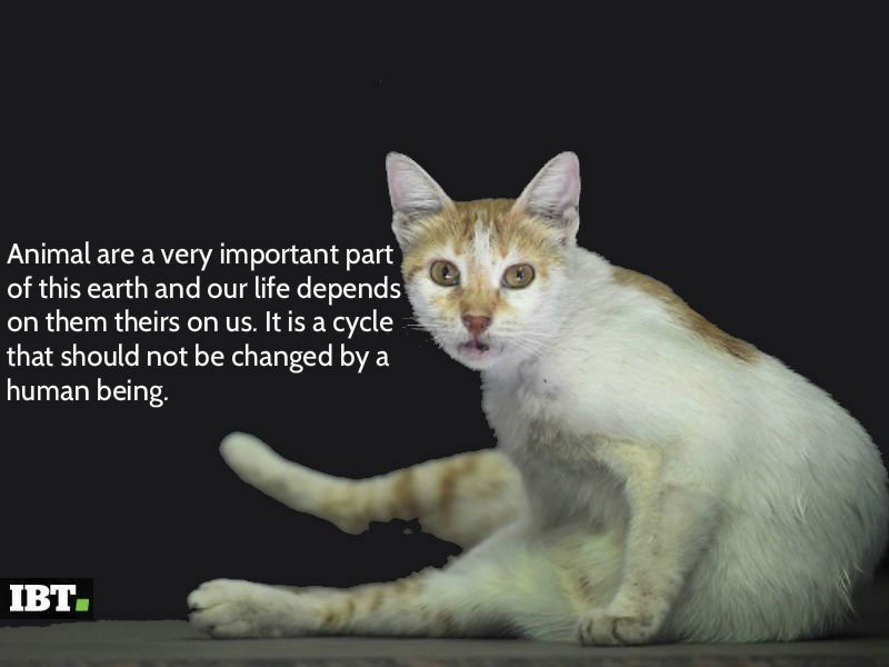 World Animal Day 2016,World Animal Day,World Animal Day quotes,World Animal Day greetings,World Animal Day posters,World Animal Day pics,World Animal Day images,World Animal Day stills,World Animal Day pictures,World Animal Day sayings