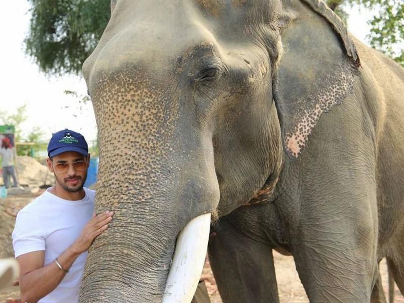 Siddharth Malhotra,Mathura elephant rescue centre,Mathura elephant rescue,Siddharth Malhotra pics,Siddharth Malhotra images,rehabilitation centre