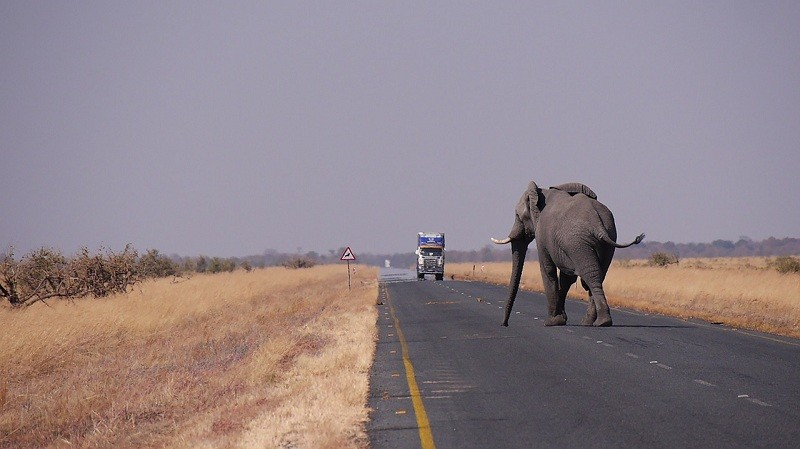 24. Botswana, 18.4