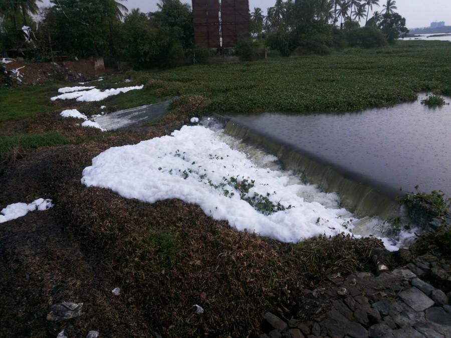 Bangalore varthur lake,varthur lake contamination,varthur lake foams