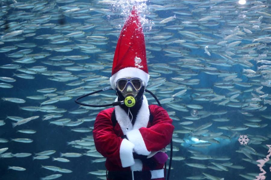 Seoul,South Korea,Christmas 2018,Swimming Santa,Santa Claus,Swimming With Fishes,aquarium,Christmas In Asia