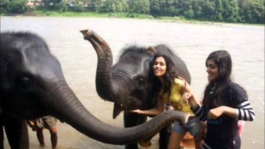 Elephant Ride Lands Nazriya Nazim in Trouble,Nazriya Nazim in Trouble,Nazriya Nazim elephant ride,Nazriya Nazim elephant ride pics,Nazriya Nazim elephant ride images,Nazriya Nazim elephant ride photos,Nazriya Nazim elephant ride pictures