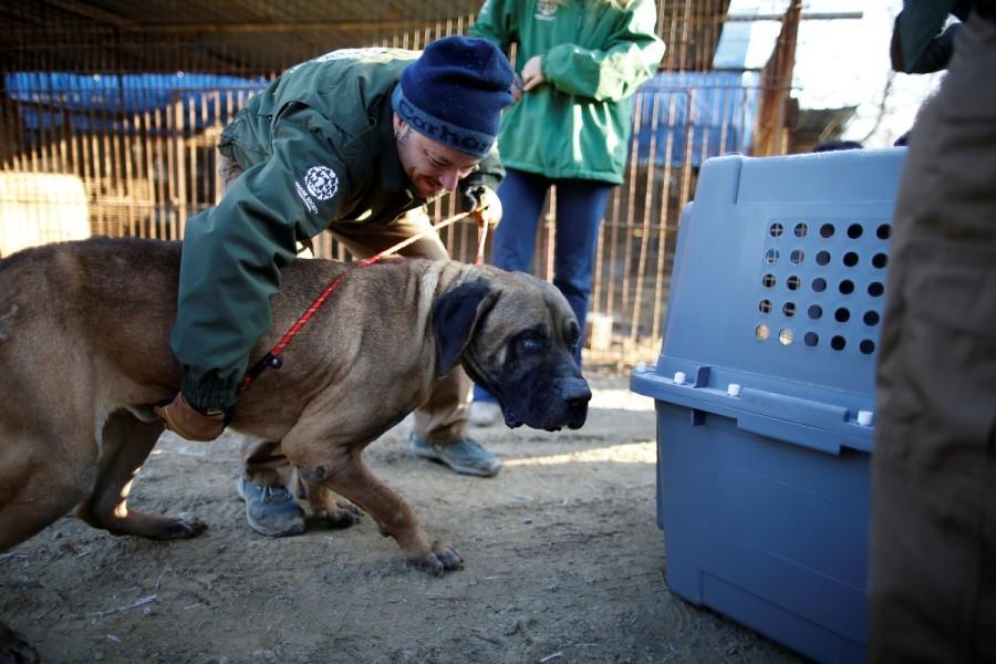 Dog meat farm,dog meat,dog-meat farm,South Korea,Dog cages,U.S,Humane Society International rescue,Humane Society,dog meat farm in Wonju