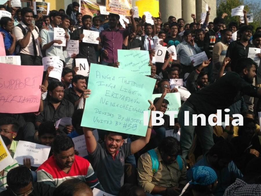 Bengaluru stands with Tamil Nadu,Jallikattu ban,Jallikattu,Jallikattu protest,Jallikattu protest in Bangalore,Town hall